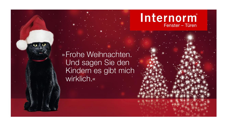 Weihnachten_Kater